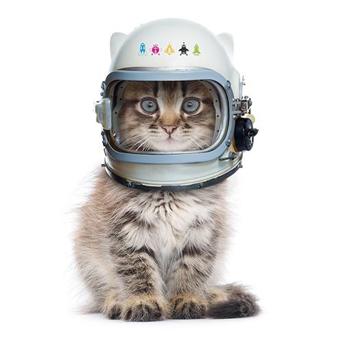 chat-cosmonaute-petit.jpg